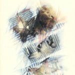 STELLE MARINE 1998, Rip. fotografici e matite colorate su carta cm 50x70